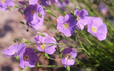 Blütenkalender Juni