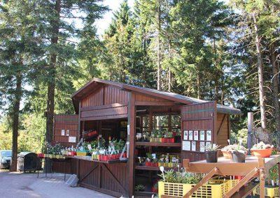 Rennsteiggarten Oberhof - Rundgang - Eingang - Pflanzenshop