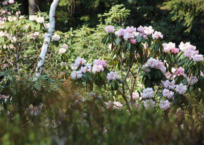 Rennsteiggarten Oberhof - Rundgang - im Rhododendronweg