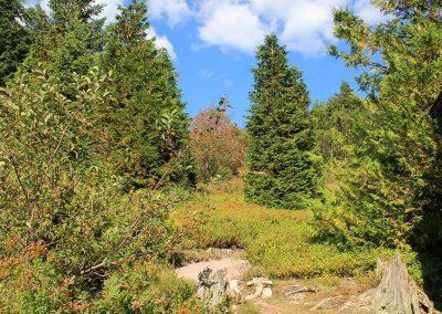 Rennsteiggarten Oberhof - Rundgang - Bereich Nordamerika
